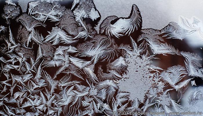 Стрептокарпусы фото уход